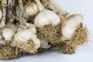 Explaining Garlic's Power