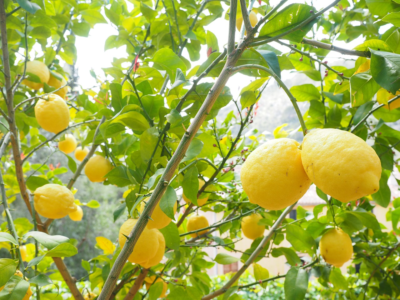 What Does Lemon Water Do for You?
